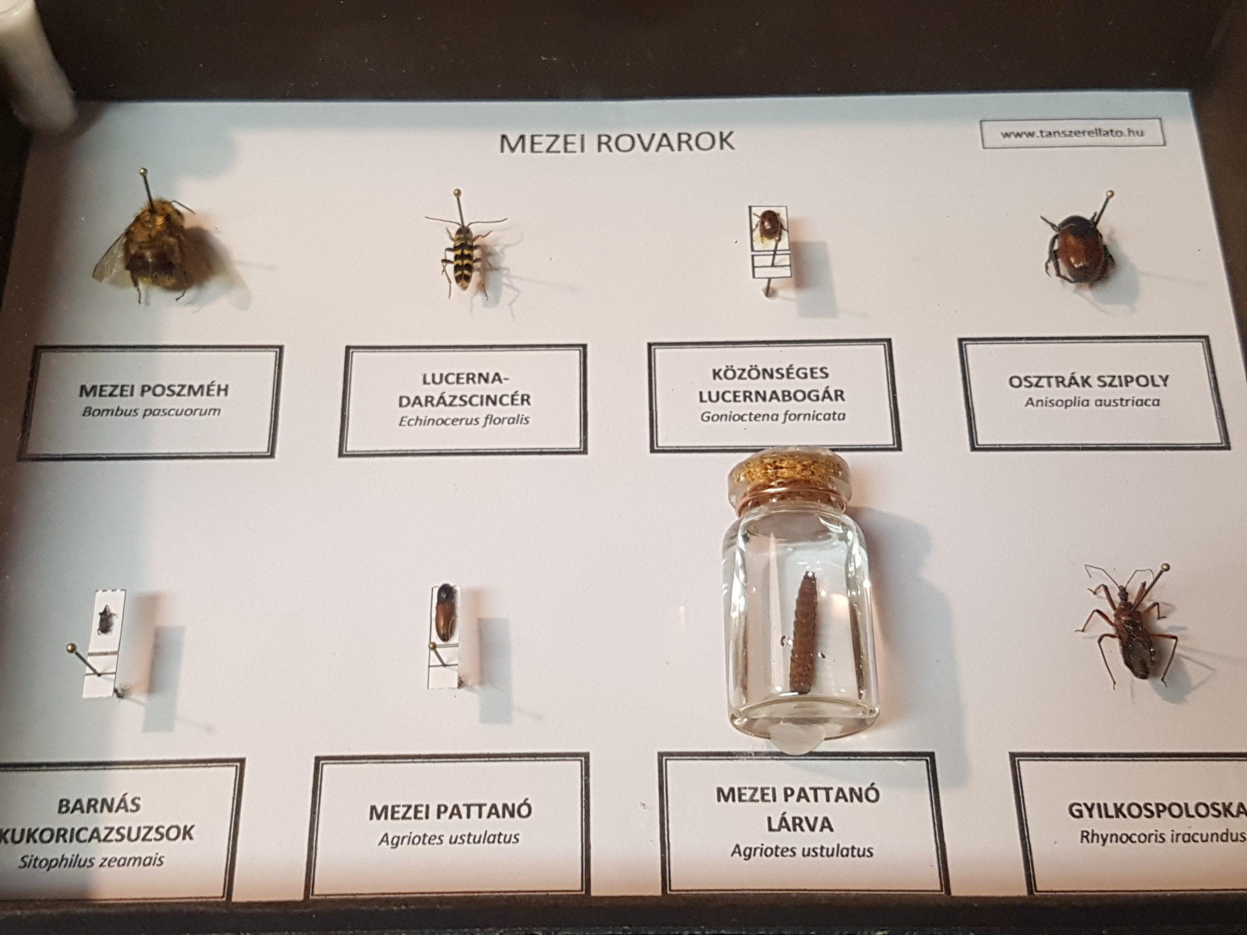 Mezei rovarok