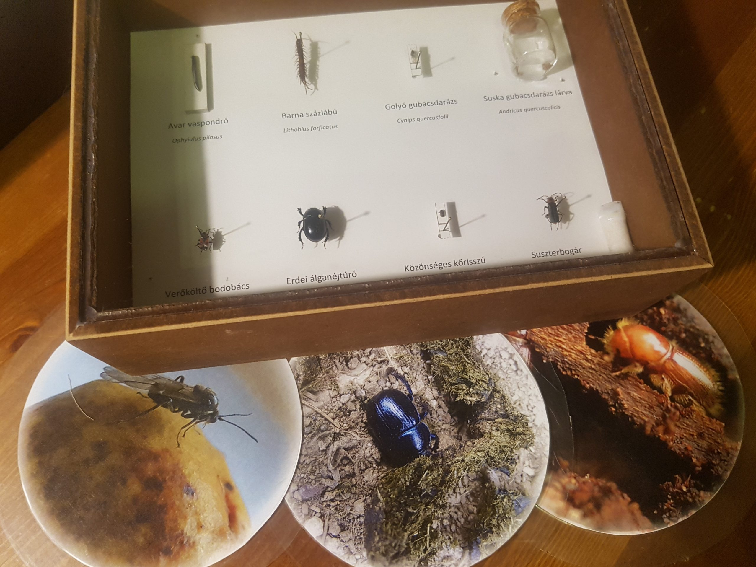 Erdei rovarok